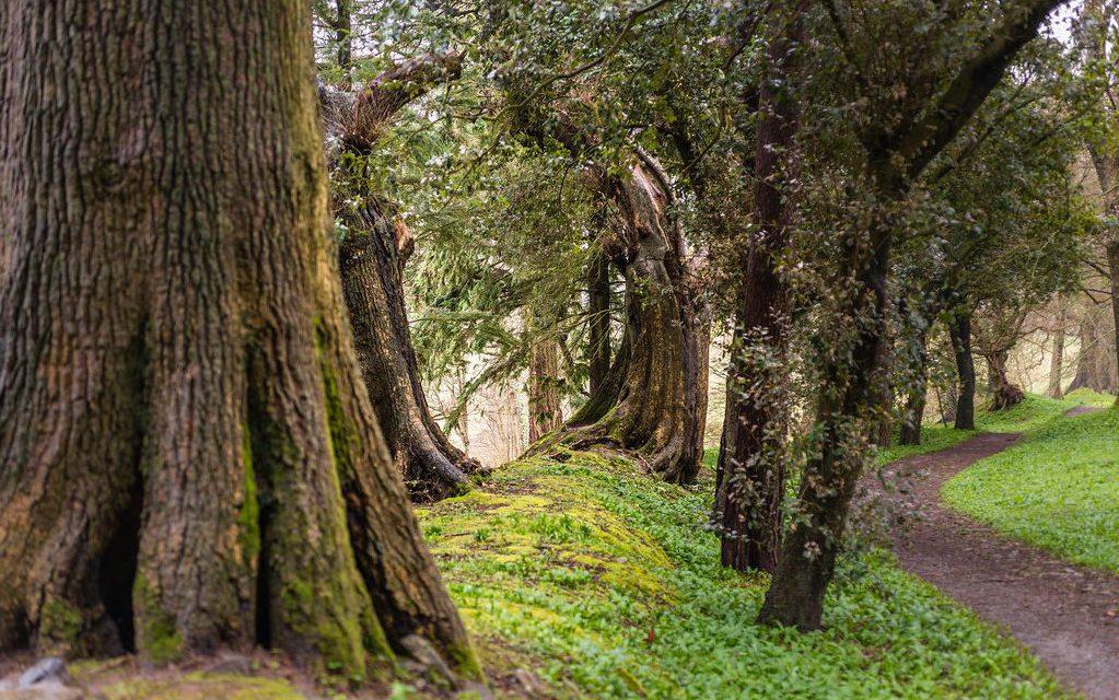 In einem Park: Alte, knorrige Bäume säumen einen Weg mit mehreren Biegungen. Zwei der Bäume sind ineinander gewachsen und bilden einen Torbogen durch den man schauen kann.