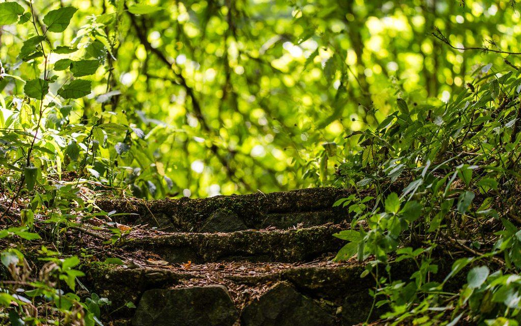 Steinerne Stufen, die in einen lichtdurchfluteten Blätterwald führen.
