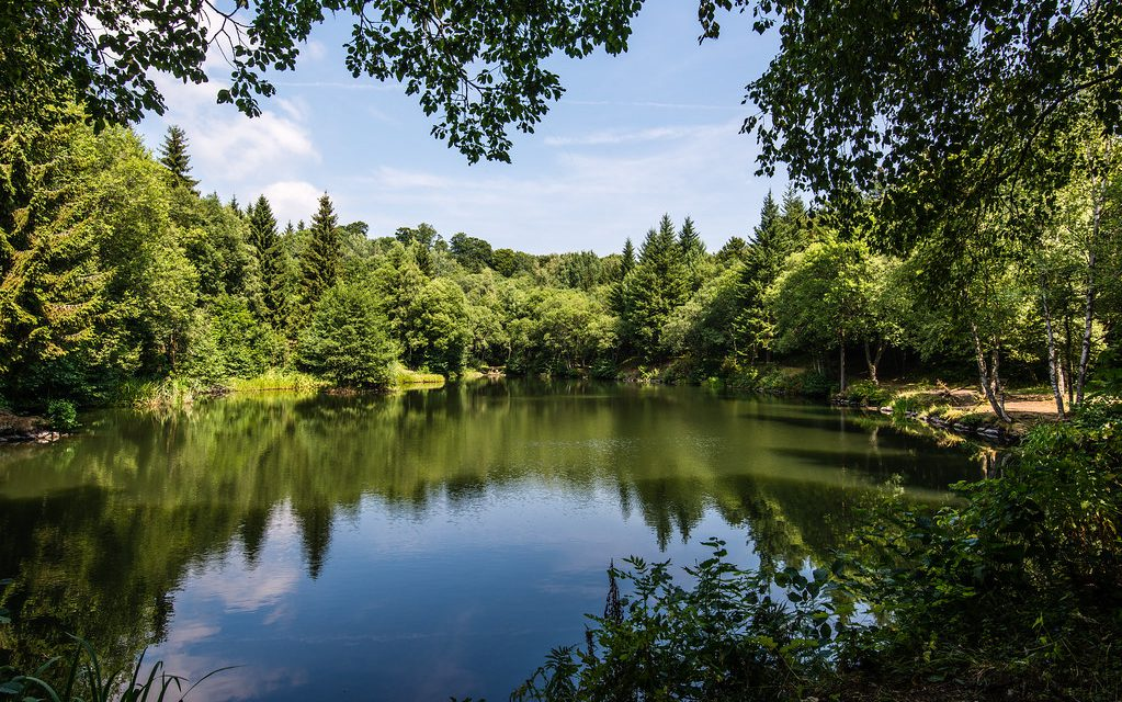 Ein ruhiger klarer See umsäumt von alten Bäumen.